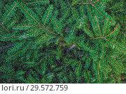Купить «Еловые ветви и белый снег (фон)», фото № 29572759, снято 5 августа 2018 г. (c) Екатерина Овсянникова / Фотобанк Лори