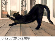 Lazy cat is stretching on the porch. Стоковое фото, фотограф Александр Сергеевич / Фотобанк Лори