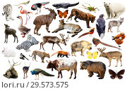 Купить «asia animals isolated», фото № 29573575, снято 22 января 2019 г. (c) Яков Филимонов / Фотобанк Лори