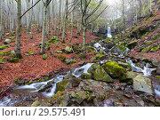 Купить «Spring beech forest with a waterfall», фото № 29575491, снято 9 мая 2017 г. (c) Михаил Коханчиков / Фотобанк Лори