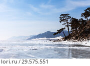 Beautiful winter landscape of the frozen lake Baikal with pine trees on the hillside. Стоковое фото, фотограф Виктория Катьянова / Фотобанк Лори