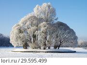 Купить «Зима в Царицыне, Москва», фото № 29595499, снято 17 декабря 2018 г. (c) Natalya Sidorova / Фотобанк Лори