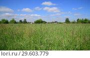 Купить «Beautiful meadow grass in Russia. Rural houses on horizon», видеоролик № 29603779, снято 25 июня 2018 г. (c) Володина Ольга / Фотобанк Лори