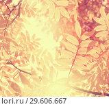 Купить «Bright autumnal background», фото № 29606667, снято 20 сентября 2018 г. (c) Икан Леонид / Фотобанк Лори