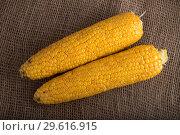 Початки  кукурузы на фоне мешковины. Стоковое фото, фотограф Литвяк Игорь / Фотобанк Лори