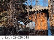 Купить «Беседка за пихтой зимним утром», эксклюзивное фото № 29626515, снято 16 декабря 2018 г. (c) Анатолий Матвейчук / Фотобанк Лори