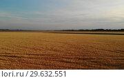 Купить «Beautiful field with ripe rye in Russia, forward movement», видеоролик № 29632551, снято 17 июня 2019 г. (c) Володина Ольга / Фотобанк Лори