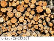 Купить «Chopped and stacked up dry firewood as background», фото № 29633631, снято 10 августа 2017 г. (c) FotograFF / Фотобанк Лори