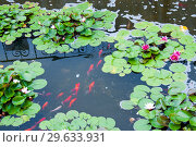 Купить «Botanical Garden of Vladivostok, fish pond», фото № 29633931, снято 27 июля 2018 г. (c) Катерина Белякина / Фотобанк Лори