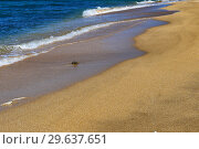 Купить «Foamy surf on a sandy tropical beach», фото № 29637651, снято 26 сентября 2015 г. (c) Евгений Ткачёв / Фотобанк Лори