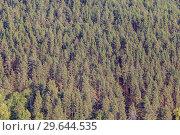 Купить «Top view of a pine forest on a hillside. The nature of the Urals», фото № 29644535, снято 7 сентября 2018 г. (c) Акиньшин Владимир / Фотобанк Лори