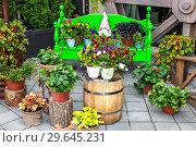Купить «Flower pots with colorful decorative flowers», фото № 29645231, снято 12 июня 2018 г. (c) FotograFF / Фотобанк Лори