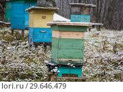Купить «Ульи на зимнем хранении», фото № 29646479, снято 9 ноября 2018 г. (c) Яковлев Сергей / Фотобанк Лори