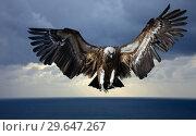 Купить «Flying vulture», фото № 29647267, снято 23 января 2019 г. (c) Яков Филимонов / Фотобанк Лори