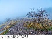 Купить «naked bush in the mountains in autumn, landscape with dense fog», фото № 29647675, снято 10 ноября 2017 г. (c) Константин Лабунский / Фотобанк Лори