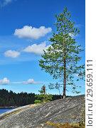 Купить «Karelian landscape - rocks, pine trees and water. Bay Chupa, White Sea, Karelia, Russia», фото № 29659111, снято 10 августа 2018 г. (c) Сергей Трофименко / Фотобанк Лори