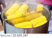 Купить «Steamed corn with a wooden plug in a cooking saucepan, street food», фото № 29659347, снято 18 февраля 2018 г. (c) FotograFF / Фотобанк Лори