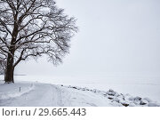 Купить «Big old tree on shore of Gulf of Finland in winter snowfall», фото № 29665443, снято 22 января 2018 г. (c) Юлия Бабкина / Фотобанк Лори