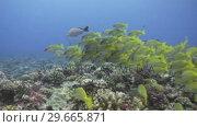 Купить «Underwater Footage», видеоролик № 29665871, снято 20 февраля 2019 г. (c) Wavebreak Media / Фотобанк Лори