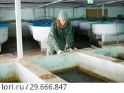 Купить «Female near fish tank on sturgeon farm», фото № 29666847, снято 4 февраля 2018 г. (c) Яков Филимонов / Фотобанк Лори