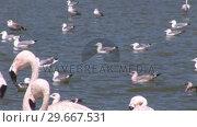 Купить «Beautiful Flamingos», видеоролик № 29667531, снято 12 июля 2020 г. (c) Wavebreak Media / Фотобанк Лори