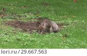 Купить «Squirrel on an Autumn Day», видеоролик № 29667563, снято 19 июня 2019 г. (c) Wavebreak Media / Фотобанк Лори
