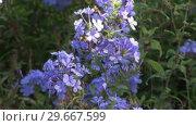 Купить «Blue Flowers», видеоролик № 29667599, снято 16 января 2019 г. (c) Wavebreak Media / Фотобанк Лори
