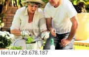 Retired couple potting plants. Стоковое видео, агентство Wavebreak Media / Фотобанк Лори