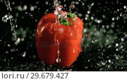 Купить «Water raining on pepper in super slow motion», видеоролик № 29679427, снято 26 января 2012 г. (c) Wavebreak Media / Фотобанк Лори