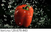 Купить «Water raining on pepper in super slow motion», видеоролик № 29679443, снято 26 января 2012 г. (c) Wavebreak Media / Фотобанк Лори
