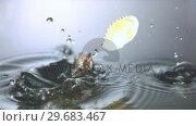 Купить «Seashells falling in water», видеоролик № 29683467, снято 29 февраля 2012 г. (c) Wavebreak Media / Фотобанк Лори