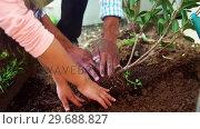 Купить «Father and daughter planting a tree in garden at backyard», видеоролик № 29688827, снято 28 июня 2016 г. (c) Wavebreak Media / Фотобанк Лори