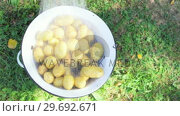 Купить « Water splashing on potatoes in garden», видеоролик № 29692671, снято 26 августа 2016 г. (c) Wavebreak Media / Фотобанк Лори