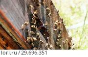 Купить «Close-up of honey bee frame covered with bees», видеоролик № 29696351, снято 27 октября 2016 г. (c) Wavebreak Media / Фотобанк Лори