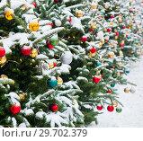 Купить «Ветви новогодних елок, усыпанные белым снегом, с разноцветными шариками. Москва. Россия», фото № 29702379, снято 3 января 2019 г. (c) E. O. / Фотобанк Лори