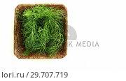 Купить «Dill herb in wooden tray 4k», видеоролик № 29707719, снято 5 июня 2017 г. (c) Wavebreak Media / Фотобанк Лори