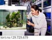 Купить «Girl looking at striped tropical fish in aquarium with rocks and seaweed inside», фото № 29729679, снято 17 февраля 2017 г. (c) Яков Филимонов / Фотобанк Лори