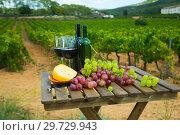 Купить «Red wine, cheese and grapes with green vineyard», фото № 29729943, снято 22 мая 2019 г. (c) Яков Филимонов / Фотобанк Лори