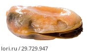Купить «Close up view of peeled mussel», фото № 29729947, снято 20 января 2019 г. (c) Яков Филимонов / Фотобанк Лори
