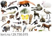Купить «asia animals isolated», фото № 29730015, снято 22 января 2019 г. (c) Яков Филимонов / Фотобанк Лори