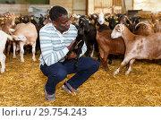 Купить «African American owner of goat farm with little goats», фото № 29754243, снято 15 декабря 2018 г. (c) Яков Филимонов / Фотобанк Лори