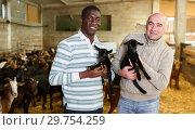 Купить «Two successful breeders with goatlings», фото № 29754259, снято 15 декабря 2018 г. (c) Яков Филимонов / Фотобанк Лори