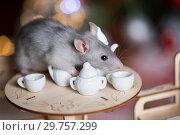 Купить «Gray rat symbol of the new year», фото № 29757299, снято 19 января 2019 г. (c) Типляшина Евгения / Фотобанк Лори