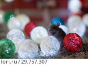 Купить «Gray rat symbol of the new year», фото № 29757307, снято 19 января 2019 г. (c) Типляшина Евгения / Фотобанк Лори