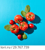 Купить «Tomatoes with green stems and spinach leaves presented on a blue background with reflection of the shadows. Organic vegetables. Flat lay», фото № 29767739, снято 16 апреля 2018 г. (c) Ярослав Данильченко / Фотобанк Лори