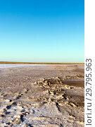 Steppe saline soils. Steppe prairie veldt veld. Saline soils of the desert. Salt lakes. Стоковое фото, фотограф Евгений Ткачёв / Фотобанк Лори
