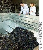 Купить «Two engineers of winery controlling process», фото № 29796095, снято 13 сентября 2018 г. (c) Яков Филимонов / Фотобанк Лори