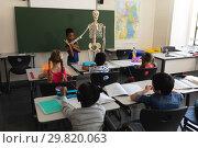 Купить «Rear view of schoolboy explaining human skeleton model in classroom», фото № 29820063, снято 10 ноября 2018 г. (c) Wavebreak Media / Фотобанк Лори