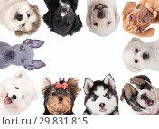 Купить «Collage of cute baby dogs», фото № 29831815, снято 9 декабря 2017 г. (c) Алексей Кузнецов / Фотобанк Лори