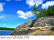 Купить «Karelian landscape - rocks, pine trees and water. Bay Chupa, White Sea, Karelia, Russia», фото № 29832115, снято 10 августа 2018 г. (c) Сергей Трофименко / Фотобанк Лори